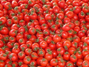 sostenibilidad en el cultivo del tomate b Conesa