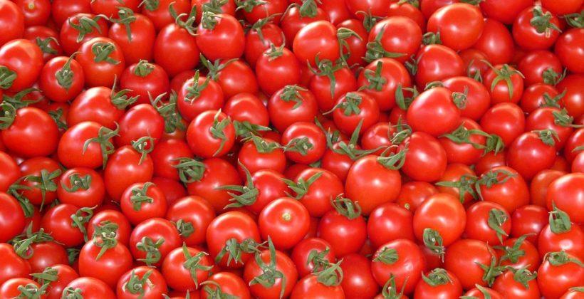 Las empresas de transformados de tomate: Conesa y Agraz y Findus mantienen a flote el cinturón de Badajoz