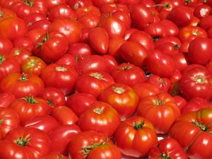 tomate sostenible conesa