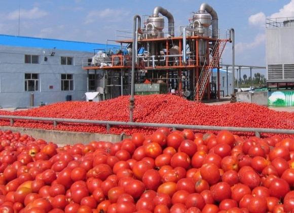 Manuel Vázquez Calleja participa en la Mesa del Tomate de Extremadura