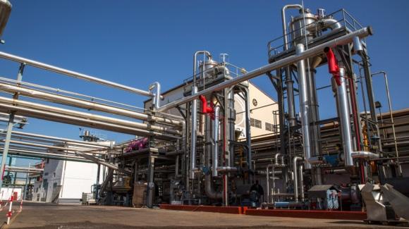 Tomate para industria: cultivo estrella en Extremadura